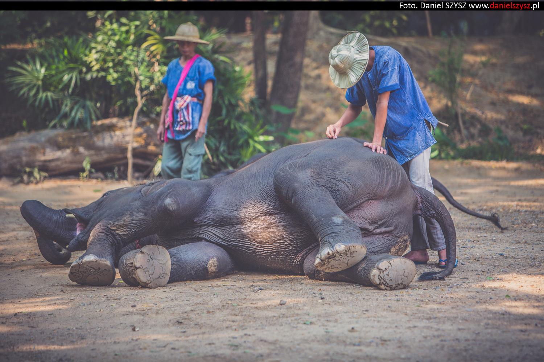 tajlandia-chiang-mai-pokazy-sloni-687