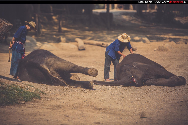 tajlandia-chiang-mai-pokazy-sloni-690