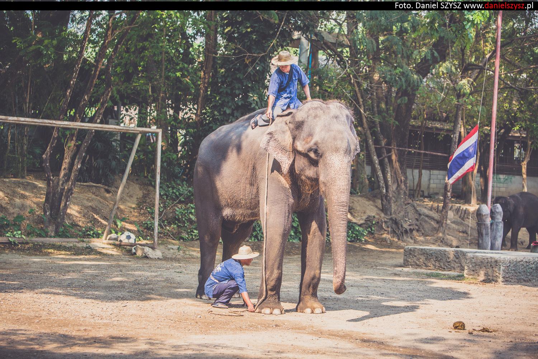 tajlandia-chiang-mai-pokazy-sloni-694