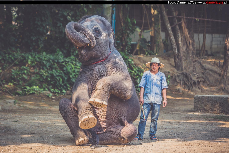 tajlandia-chiang-mai-pokazy-sloni-705
