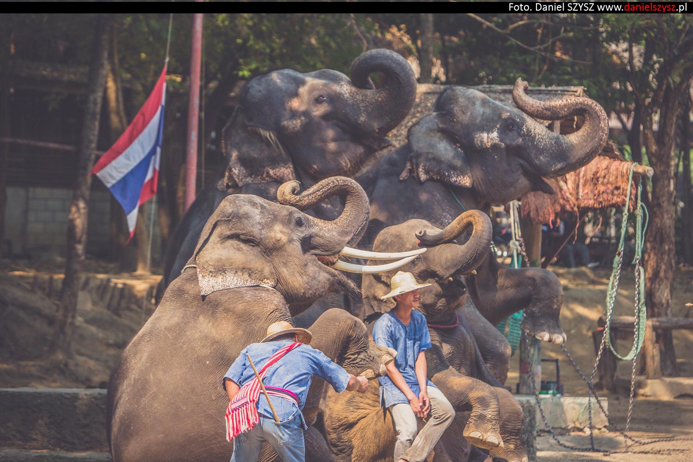 tajlandia-chiang-mai-pokazy-sloni-709