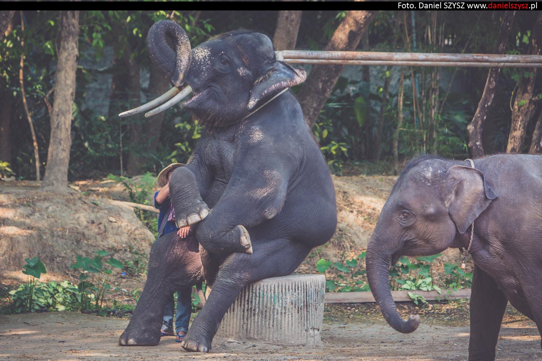 tajlandia-chiang-mai-pokazy-sloni-714