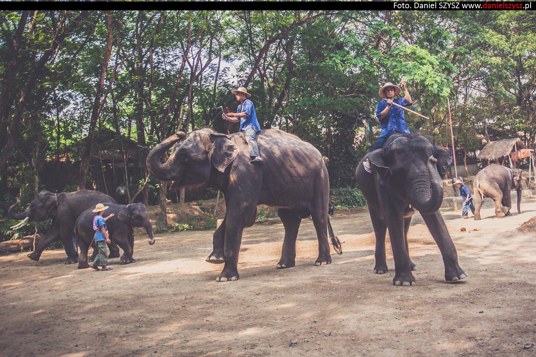 tajlandia-chiang-mai-pokazy-sloni-72