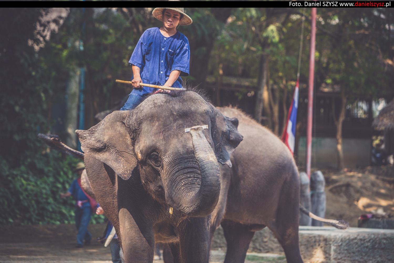 tajlandia-chiang-mai-pokazy-sloni-728