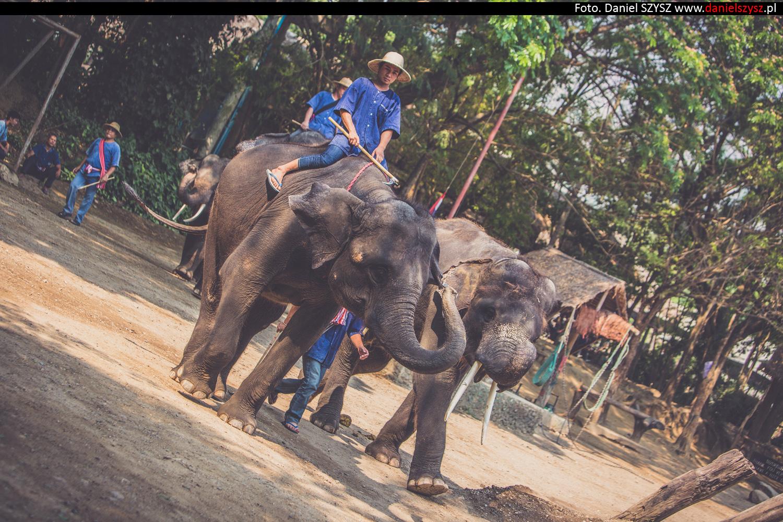 tajlandia-chiang-mai-pokazy-sloni-730