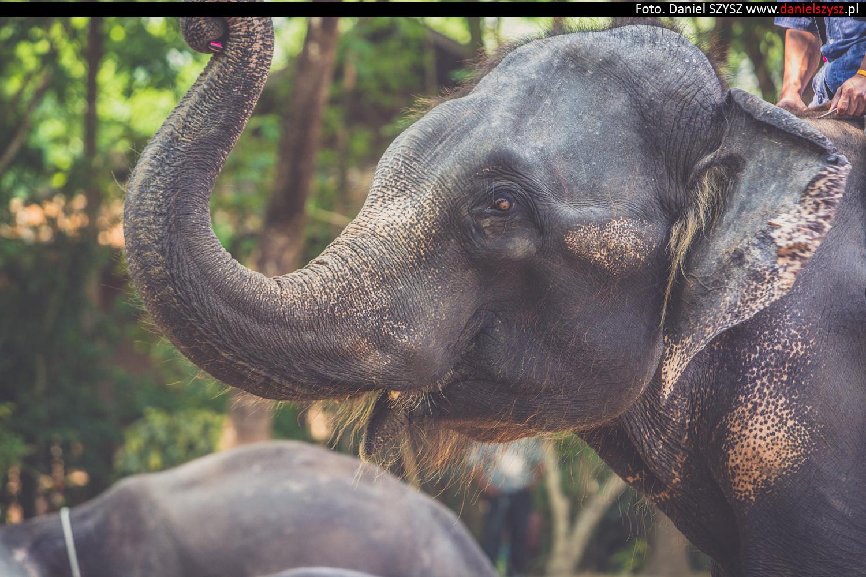 tajlandia-chiang-mai-pokazy-sloni-735