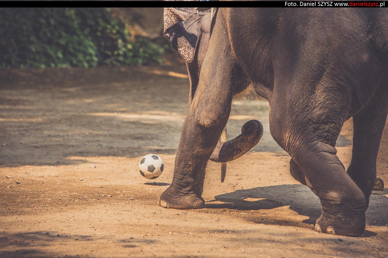 tajlandia-chiang-mai-pokazy-sloni-738