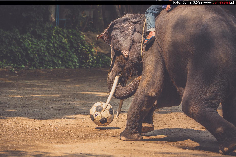 tajlandia-chiang-mai-pokazy-sloni-740