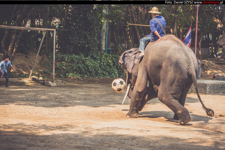 tajlandia-chiang-mai-pokazy-sloni-743