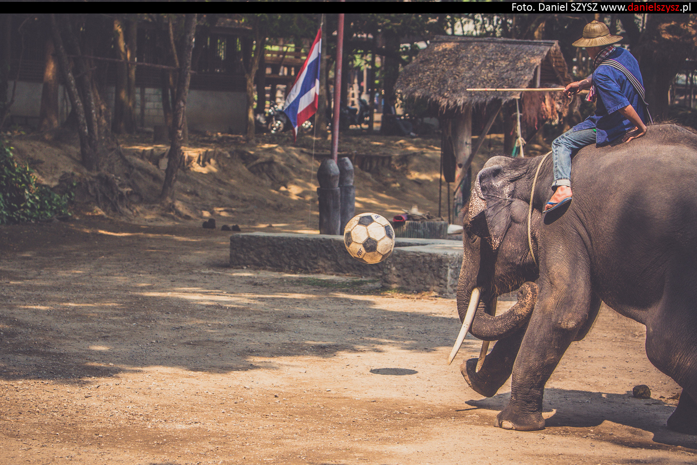 tajlandia-chiang-mai-pokazy-sloni-746