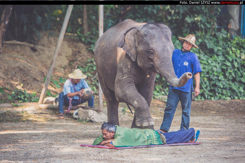 tajlandia-chiang-mai-pokazy-sloni-753
