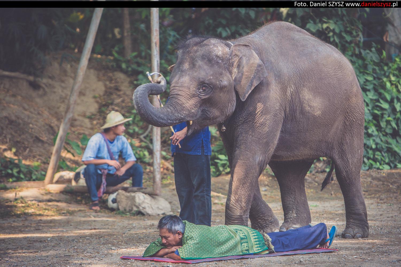 tajlandia-chiang-mai-pokazy-sloni-757