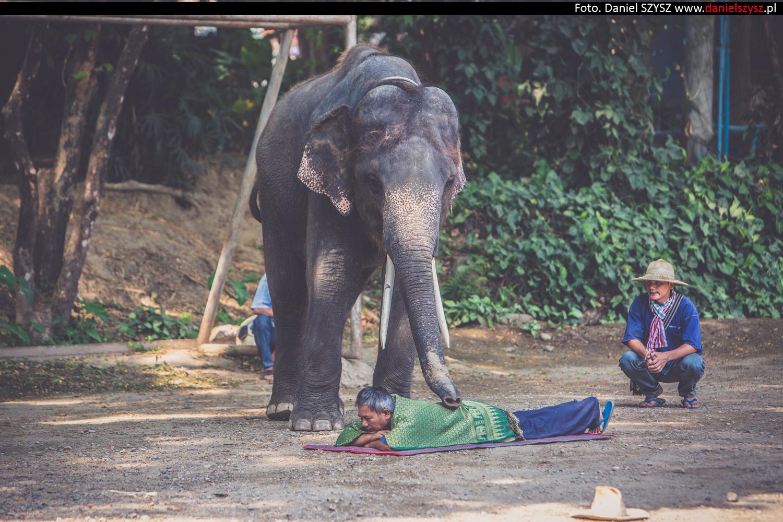 tajlandia-chiang-mai-pokazy-sloni-760
