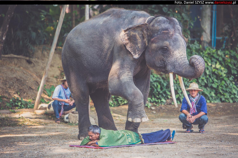 tajlandia-chiang-mai-pokazy-sloni-772