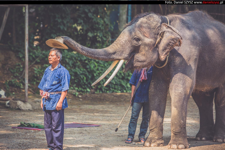 tajlandia-chiang-mai-pokazy-sloni-777