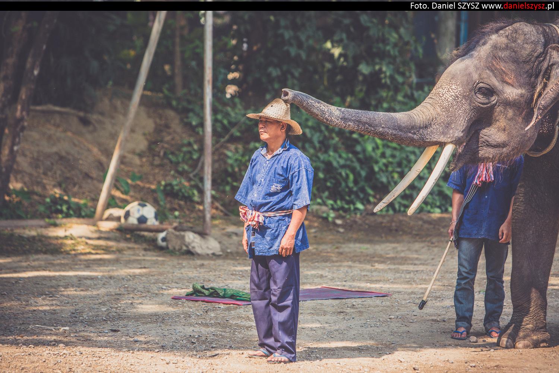 tajlandia-chiang-mai-pokazy-sloni-779