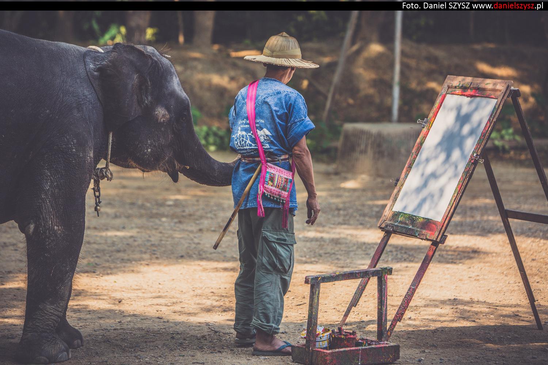 tajlandia-chiang-mai-pokazy-sloni-785