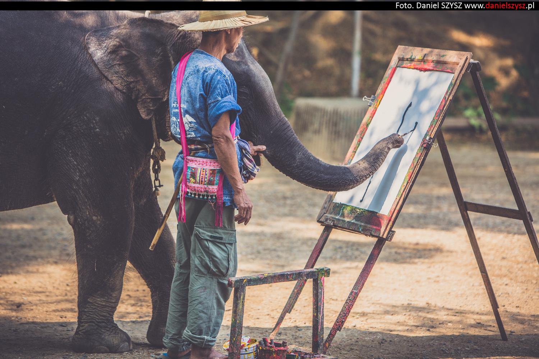 tajlandia-chiang-mai-pokazy-sloni-788