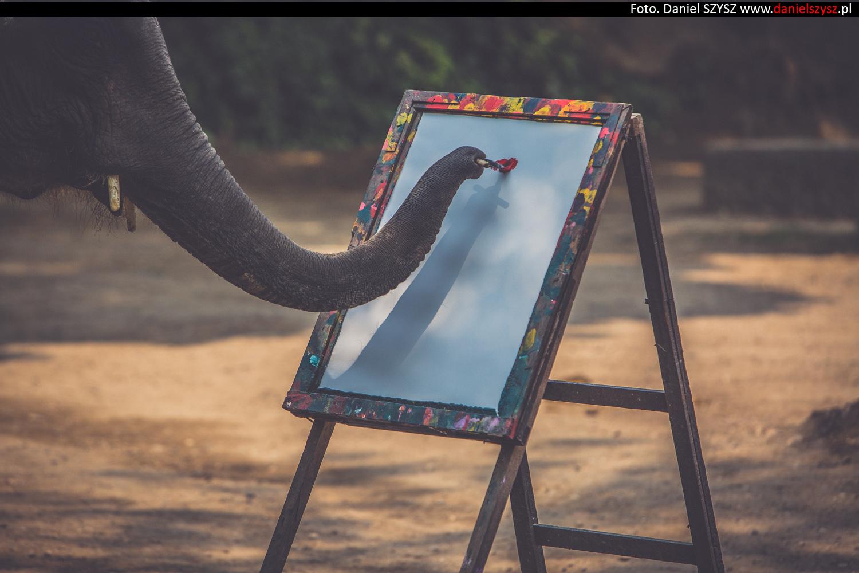 tajlandia-chiang-mai-pokazy-sloni-792