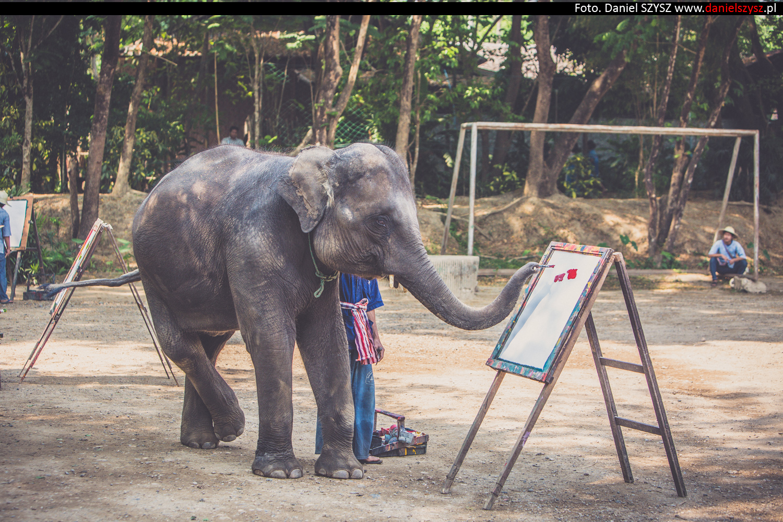 tajlandia-chiang-mai-pokazy-sloni-794