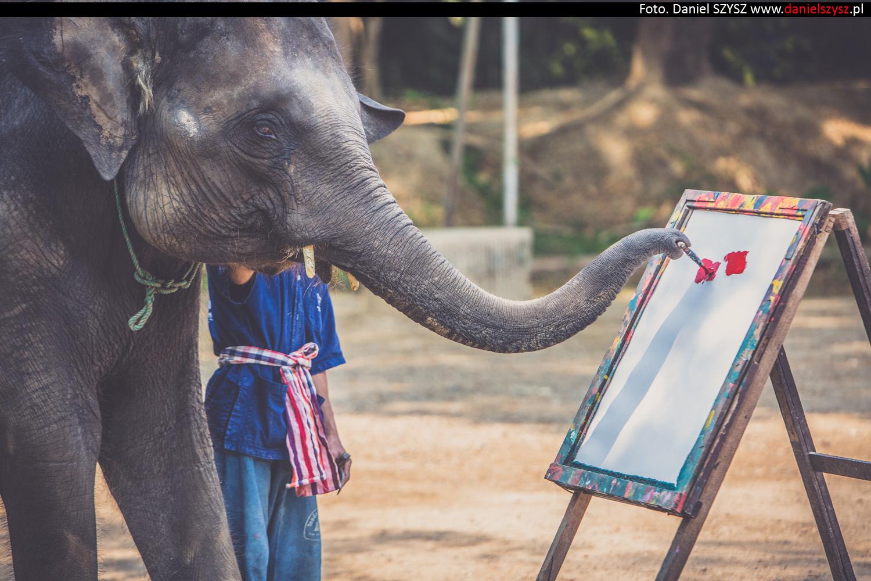 tajlandia-chiang-mai-pokazy-sloni-797