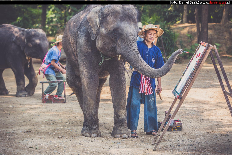 tajlandia-chiang-mai-pokazy-sloni-801