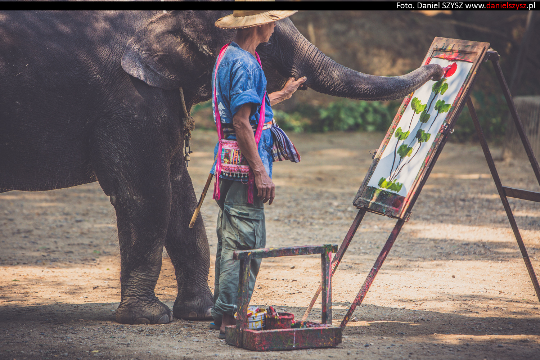 tajlandia-chiang-mai-pokazy-sloni-809