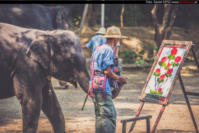 tajlandia-chiang-mai-pokazy-sloni-815