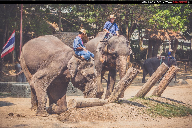 tajlandia-chiang-mai-pokazy-sloni-820