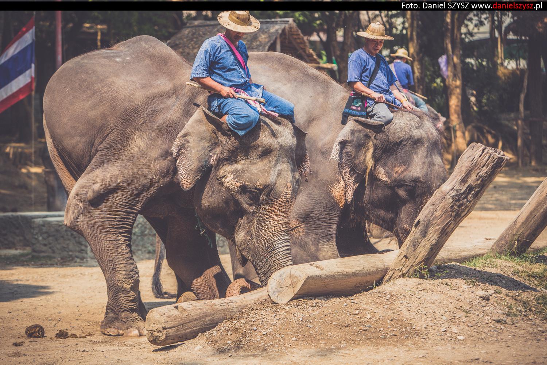 tajlandia-chiang-mai-pokazy-sloni-825