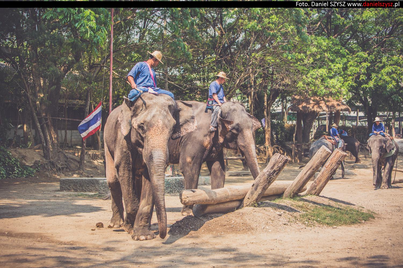 tajlandia-chiang-mai-pokazy-sloni-828