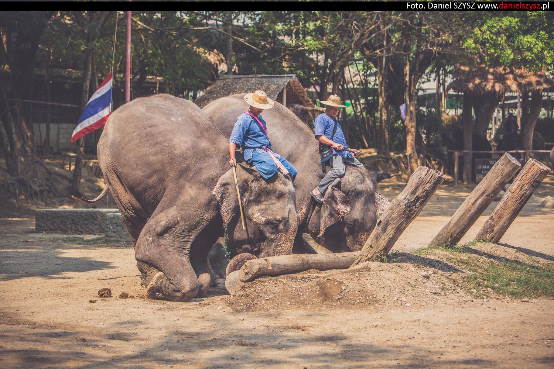 tajlandia-chiang-mai-pokazy-sloni-829
