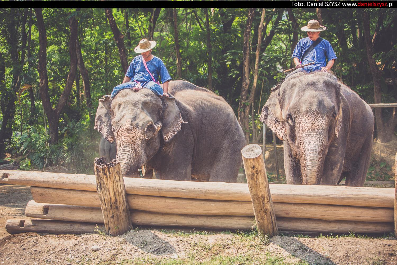 tajlandia-chiang-mai-pokazy-sloni-838