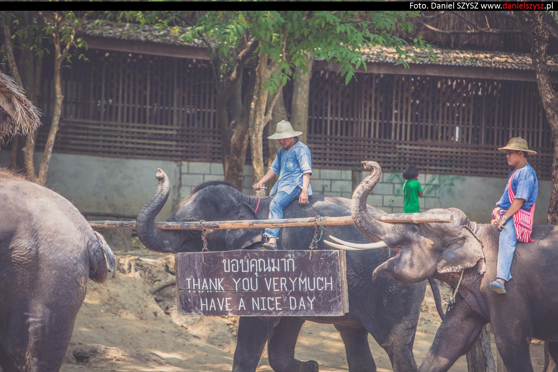 tajlandia-chiang-mai-pokazy-sloni-841