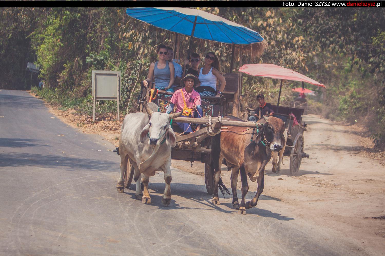 tajlandia-woly79