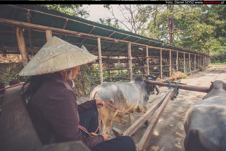 tajlandia-woly955