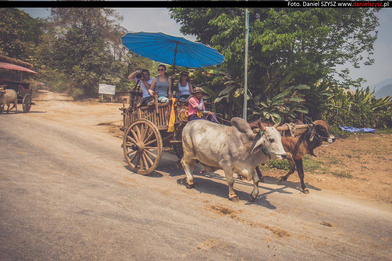 tajlandia-woly962
