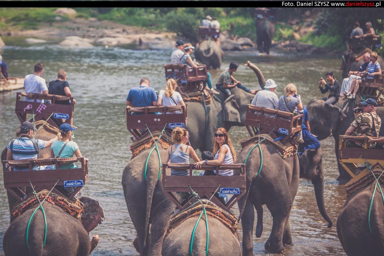 przejazdzka-na-sloniu-tajlandia-408