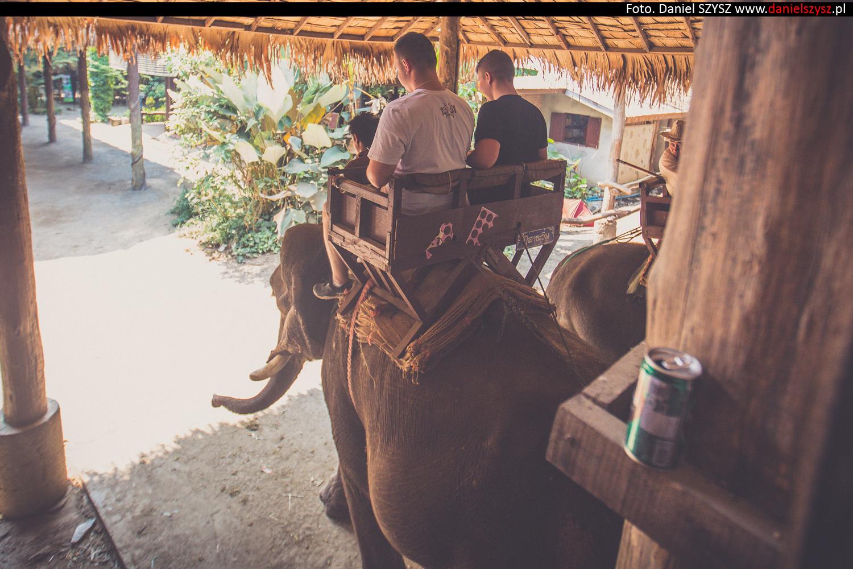 przejazdzka-na-sloniu-tajlandia-866