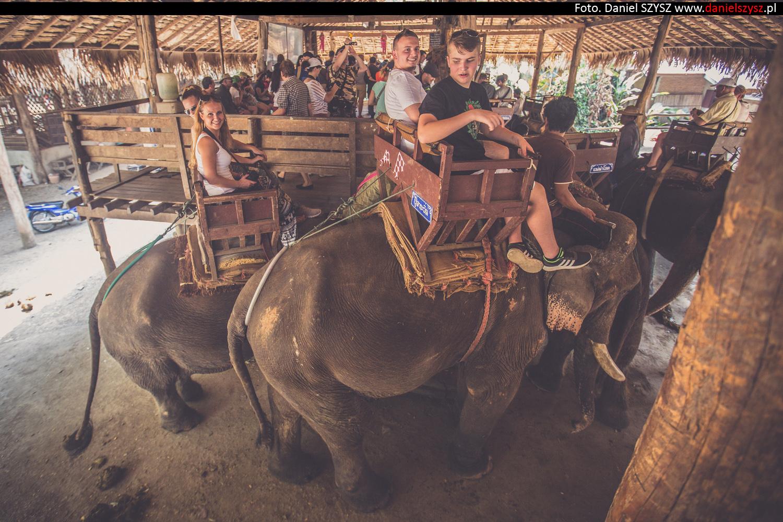 przejazdzka-na-sloniu-tajlandia-936